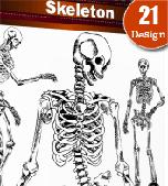 Skeleton-skull